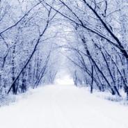 Jaro začíná už 21. prosince