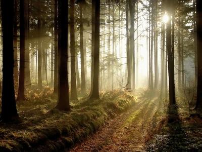 Šamanská cesta