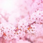 nejlepší květnové čtení na blogu ženy ženám