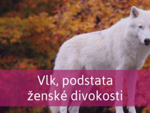 polární vlk